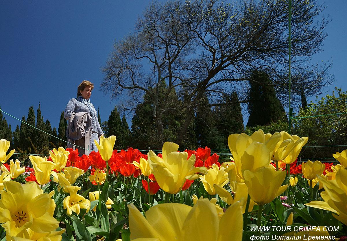 Парад тюльпанов в Никитском саду 2021: открытие в начале апреля.