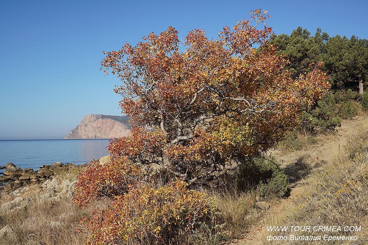 Поздняя осень у моря. Морское побережье у мыса Айя.