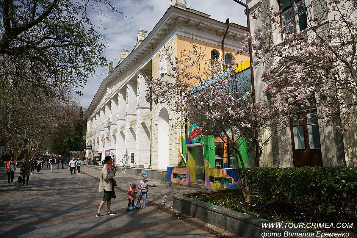 В Ялте на ул.Пушкинской в середине апреля продолжает ярко и красочно цвести магнолия.