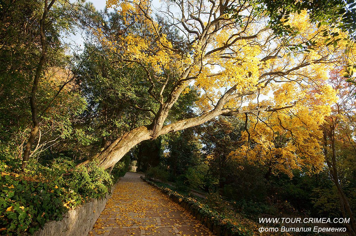 Ноябрь. Поздняя золотая осень в Никитском ботаническом саду.