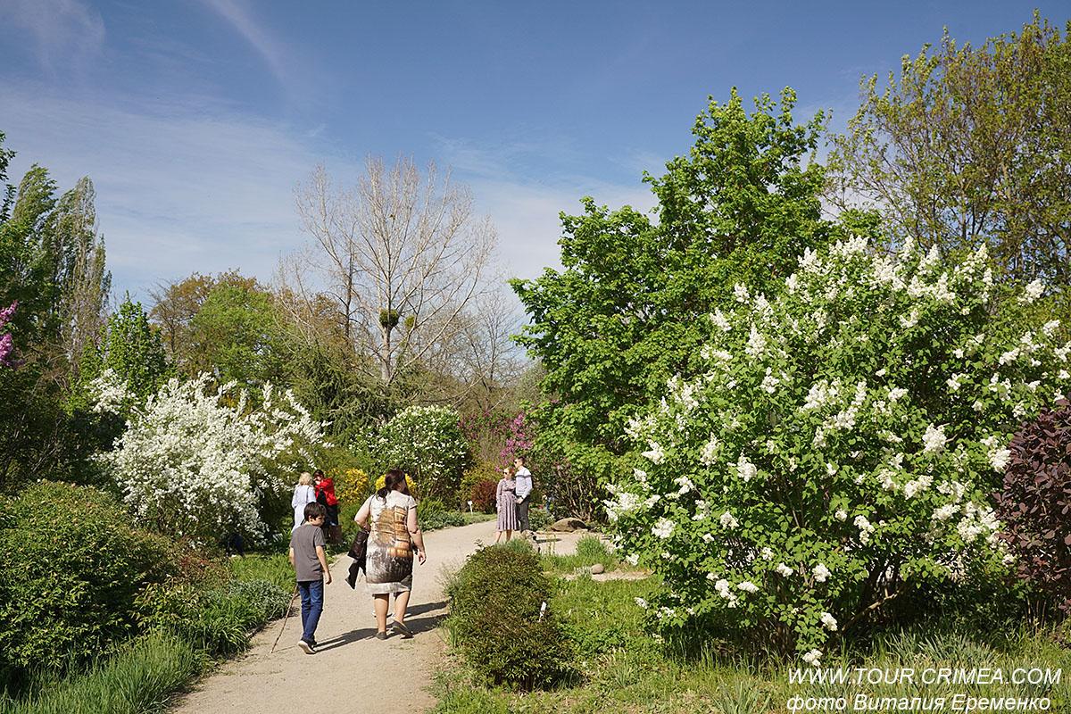 Весенняя, роскошная свежесть крымского мая.