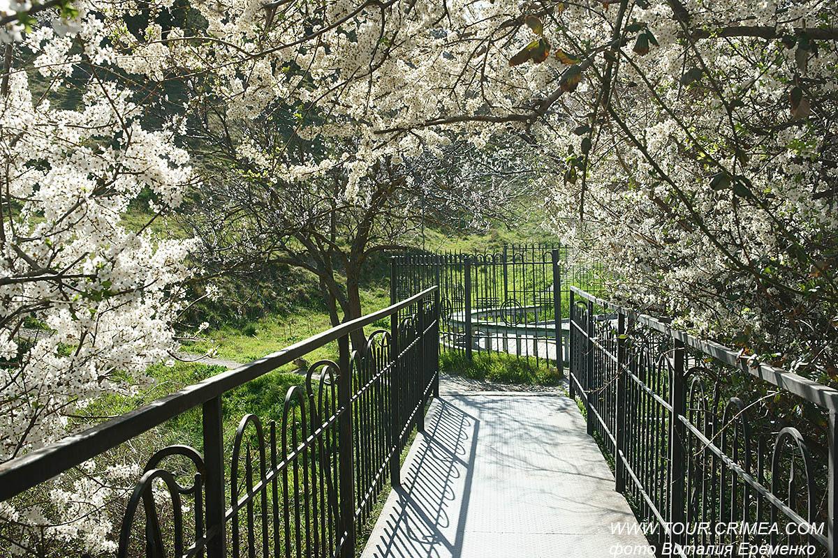 В Крыму зацвела алыча. Еще один верный признак весны!