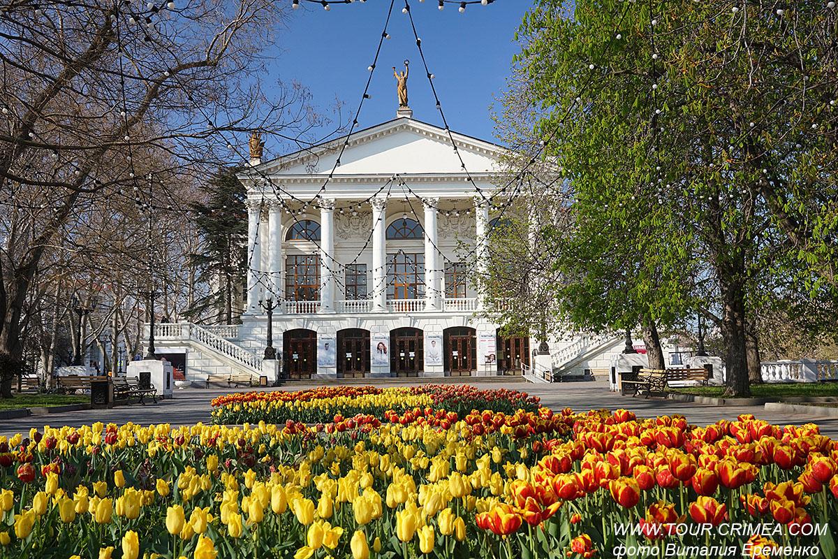 Цветущие тюльпаны у театра им.Луначарского в Севастополе. Апрель 2021