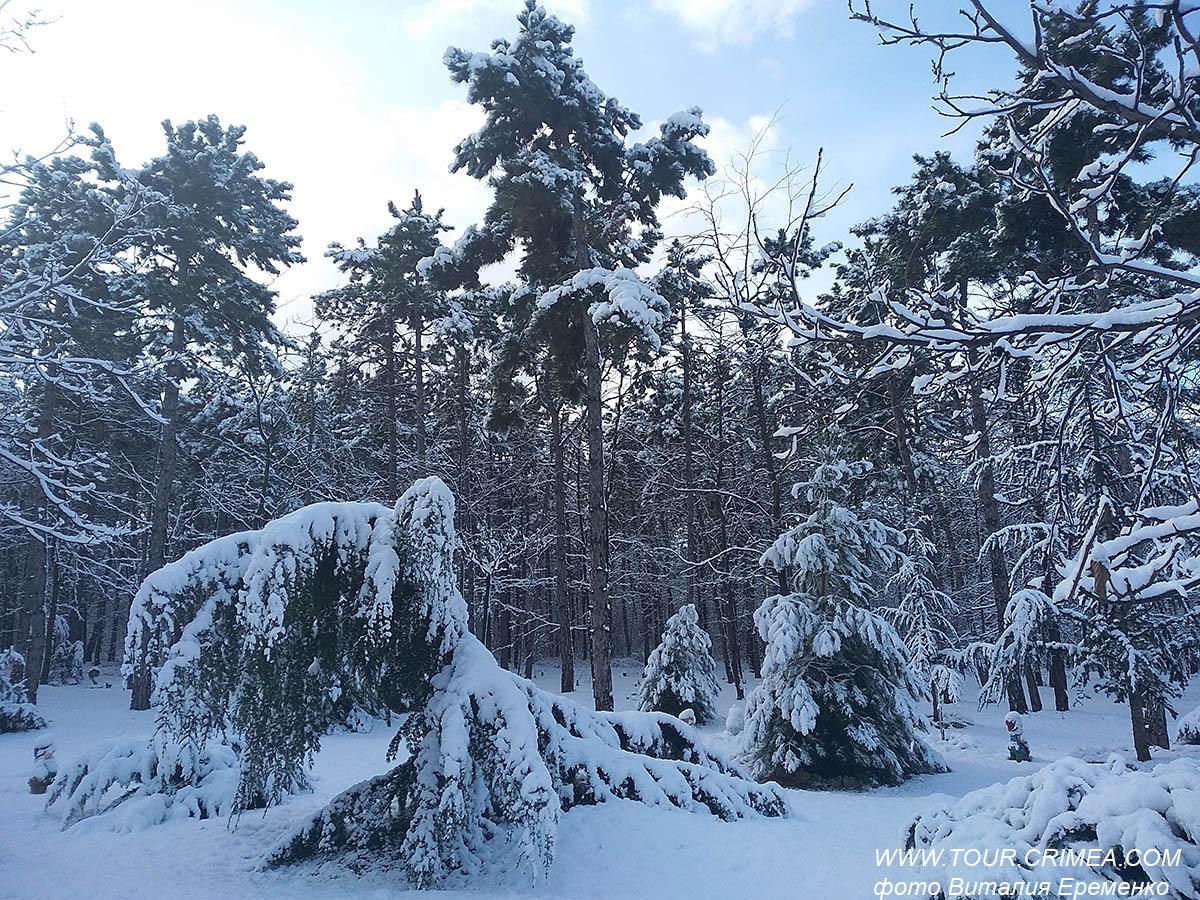 Город проснулся, украшенный  снегом...
