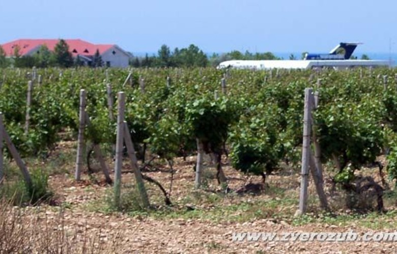 Отдых в Крыму. Алькадар винодельческое хозяйство