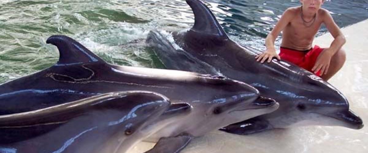 Дельфинарии и дельфинотерапия в Крыму
