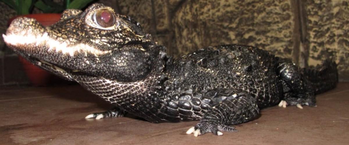 Крокодилы, черепахи и другие экзотические животные в Крыму