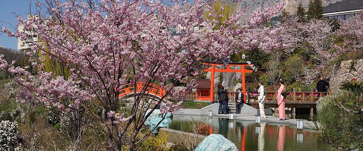 """Фестиваль """"Цветущая сакура"""" в Японском саду курортного комплекса Mriya Resort & SPA. Апрель 2021"""