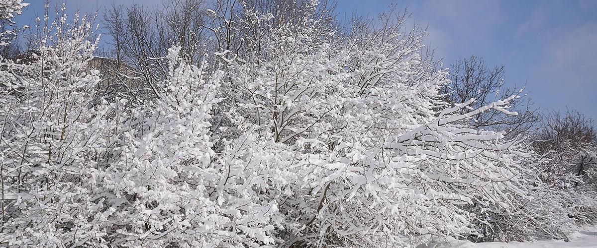 Не по-крымски снежная, по-крымски красивая зима. Февраль 2021