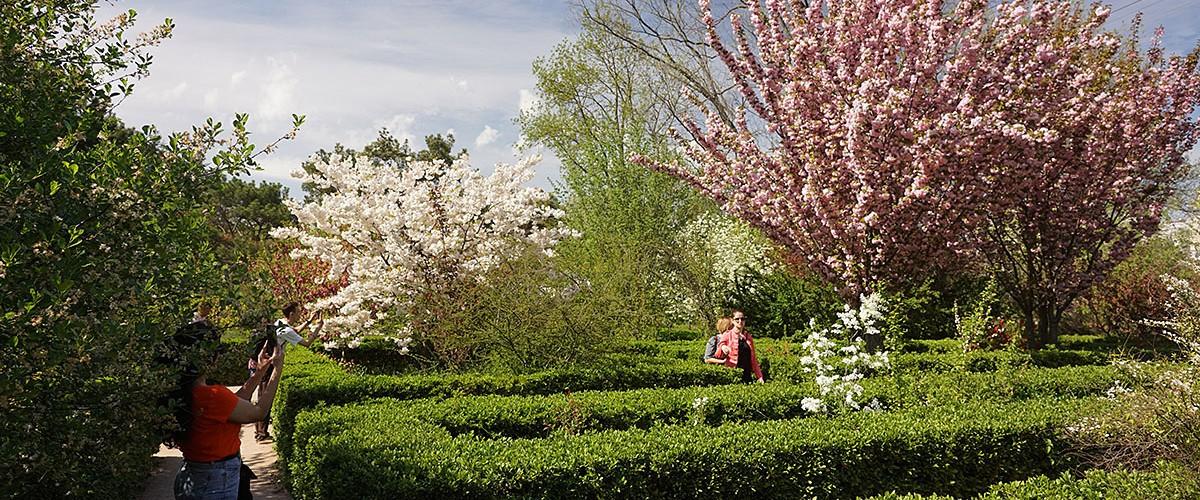 Парк ТНУ в Симферополе - цветущий райский уголок. Май 2021г.