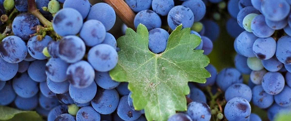 Отдых в Крыму. Фестиваль вина и гастрономии #Ноябрьфест