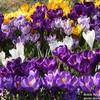 Завтра была весна! В Крыму она особенно прекрасна!