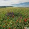 В степи  Крыма - красоты цветущего мая и аромат  разнотравья.