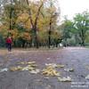Гулять под осенним дождем....  Осень. Крым